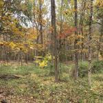 Cifelli Woods