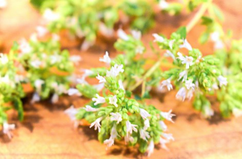 Flowering oregano, freshly picked