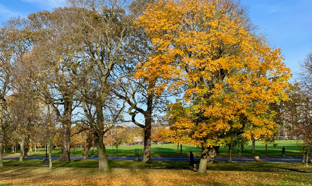 Photograph of trees on the Meadows