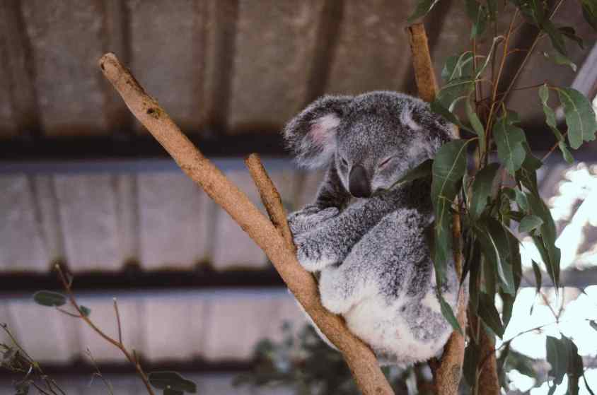 Zoo de Ueno : Que vaut ce Zoo au coeur de Tokyo ?