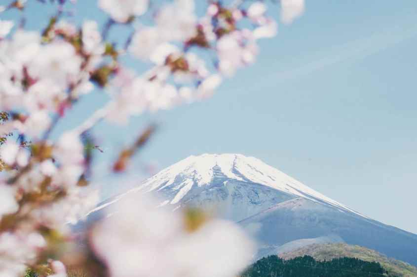 À quelle période venir au Japon pour profiter du Hanami ?
