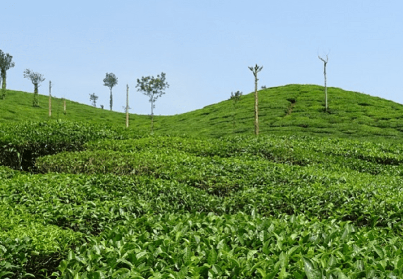 Assam Tenders 100 MW of Grid-Connected Solar PV Projects