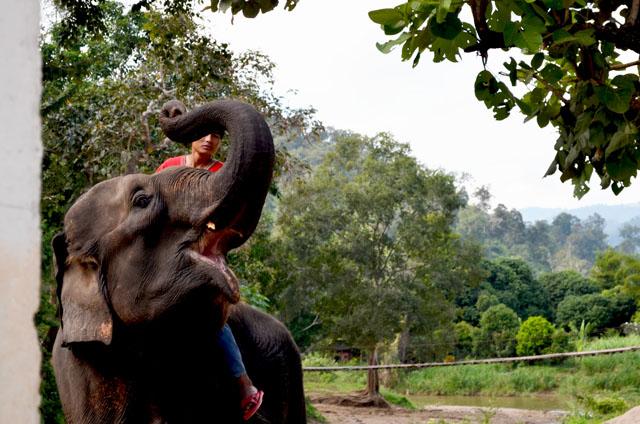 mercredie-blog-mode-voyage-thailande-elephants-chiang-mai-4