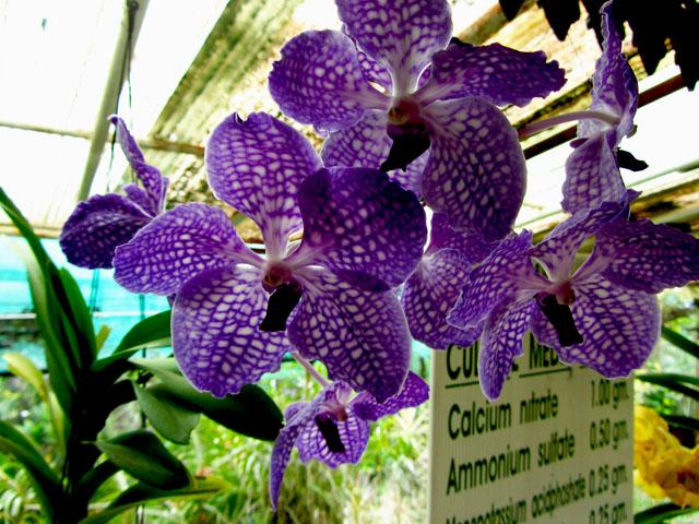 mercredie-blog-mode-voyage-thailande-ferme-aux-orchidees-chiang-mai