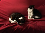 2014. Cats on a red blanket