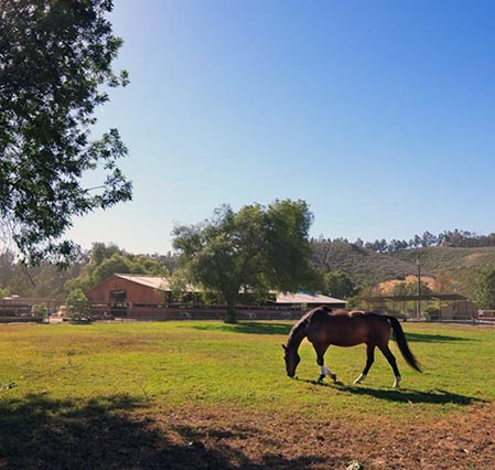 Farm Talk With Paul Ward:  All About Equestrian Properties, Ventura County!