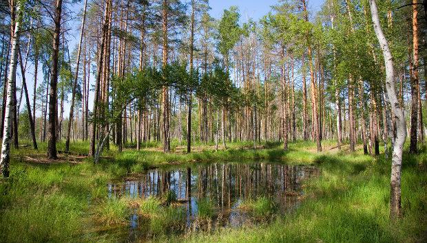 Среда обитания клещей в природе