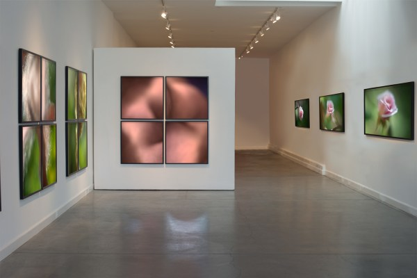 Installation view A Bouquet of Bears & A Dozen Little Roses (2014) by Chris Komater. Digital C-prints, dimensions variable
