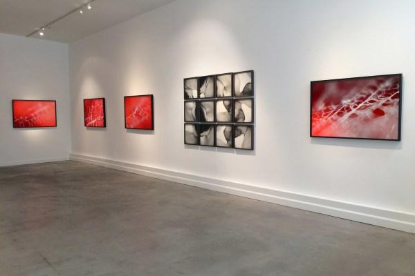 Installation view Scylla & Charybdis (2015) by Chris Komater. L-R Untitled (Spider Webs #601, #595, #608). Digital C-prints, 30 x 45 each; Scylla, framed gelatin silver prints, 47 x 63 installed; Untitled (Spider Web #605), digital C-print, 30 x 45