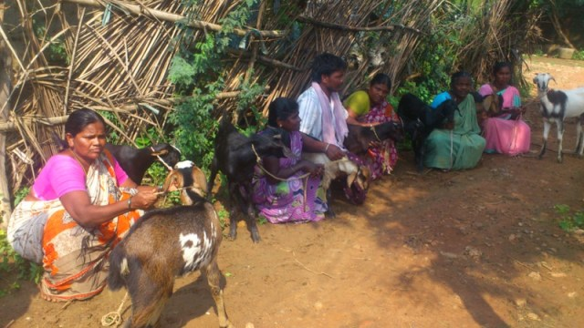 Goat Project for village family..