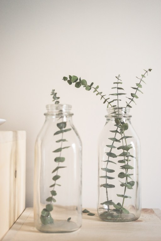 Easy ways to add greenery to your home - Bring in some life and fresh greens with some simple tips | MeredithAmand.com
