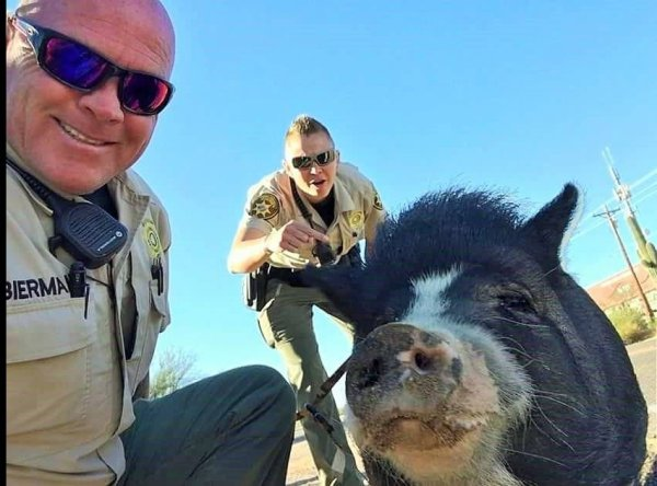 Sheriff's deputies rescue man from charging pig - 3TV | CBS 5