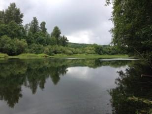 An oxbow wetland along the Chehalis