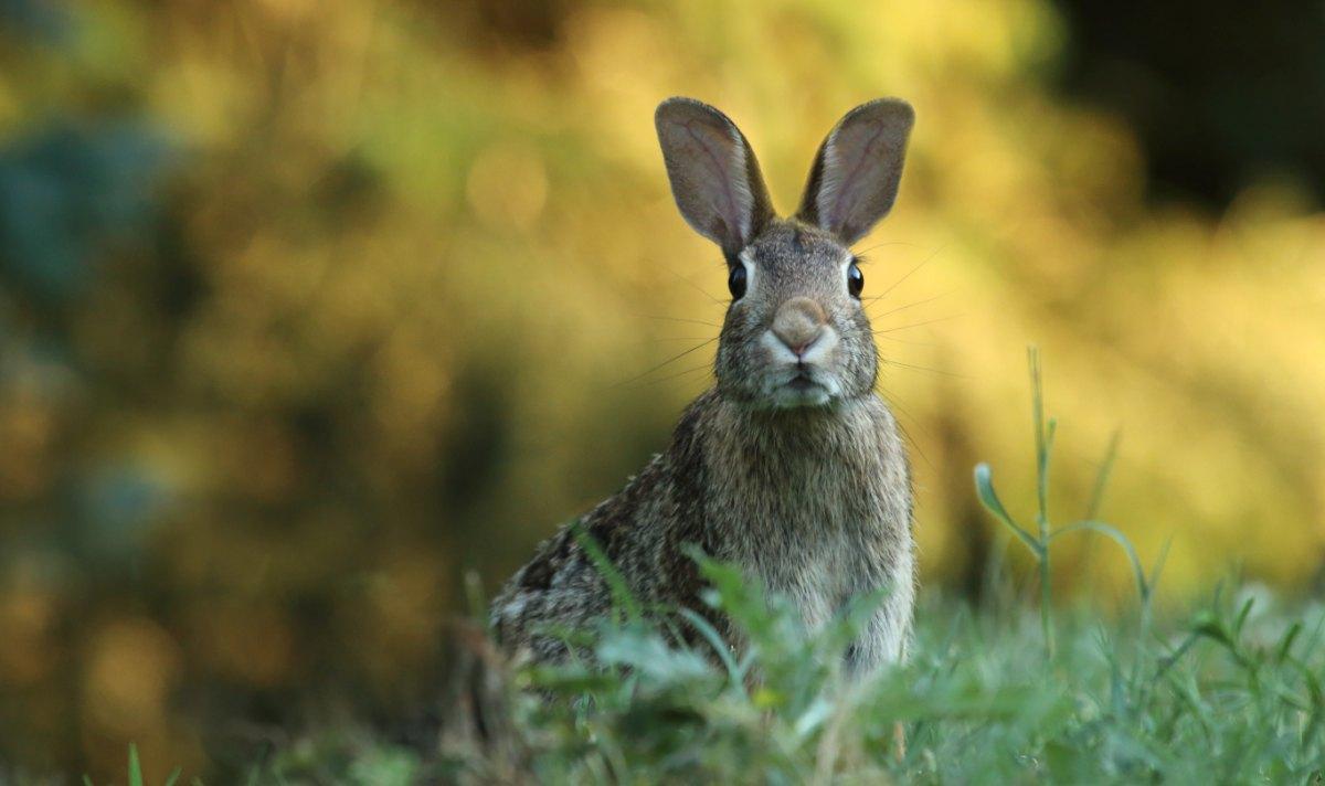 afraid to fail rabbit