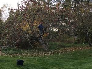 margit_i_æbletræ
