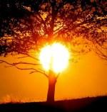 El 112 Extremadura activará mañana la alerta amarilla por calor en las comarcas cacereñas del Tajo y el Alagón