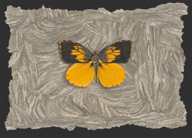 Derek Bond, California Dogface Butterfly, egg tempera on hornet nest paper, 2009