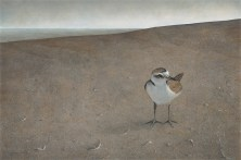 Little Snowy by Derek Bond, Limited Edition print from original egg tempera painting.