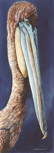 Immature Brown Pelican – by Linda Parkinson, Limited Edition print from original watercolor.