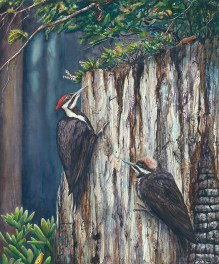 Pilleated Woodpeckers – by Linda Parkinson, Limited Edition print from original watercolor.