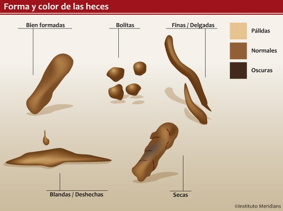 Ilustración: Dardané González // Instituto Meridians