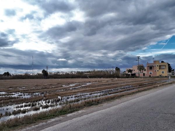 Parco dell'Albufera - Valencia - 12