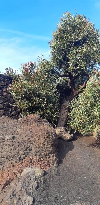 Lanzarote-Jardin-de-Cactus-13