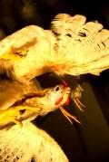 Kanad Ferrodrumi näitusel 2008 / Chickens on display at Ferrodrum Gallery 2008