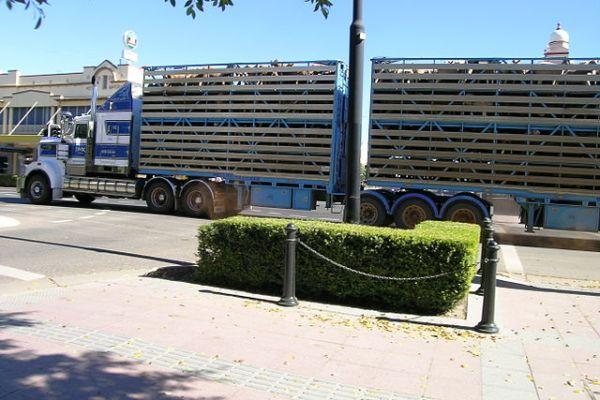 Live Transportation of Sheep in Australia