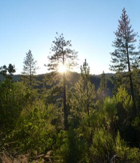 Sunsetting over the Foresthill Divide.