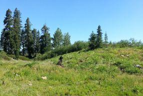 Me meadow singletrack