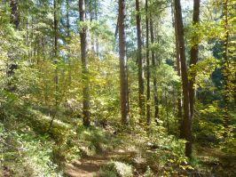 South Yuba Trail