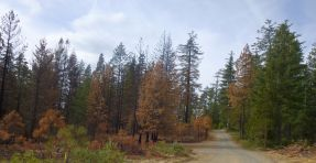 Deadwood Road. Burned right up to the road.