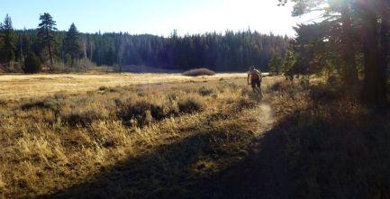 Klondike Meadow