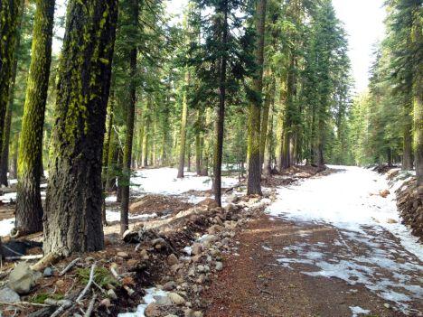 trees-sodaspringsroad