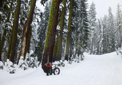 Fat-Sherpa-BarkerPassRd_Trees