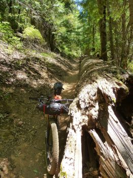 The big downed log on 2nd Divide