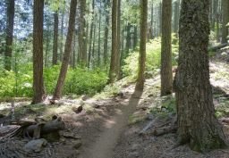 3rd Divide Trail