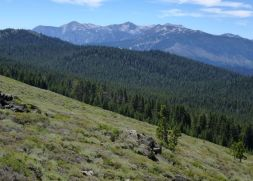 View to Heavenly Ski Area from the Bench south of Spooner summit.
