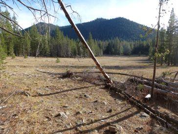 meadow-sawtooth