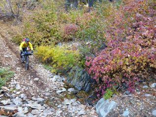 Lavezolla Creek Trail