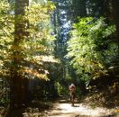 Sean in the leaves' light where Lavezolla Creek Trail turns to dirt road.