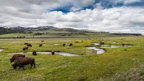 Lamar Valley_Rose Creek
