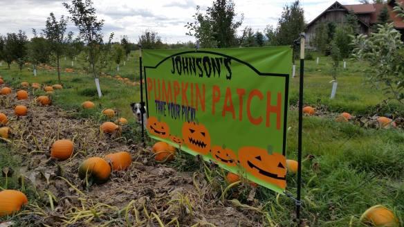 Johnson's Pumpkin Patch