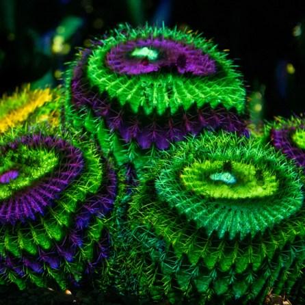 Cactus - Electric Desert
