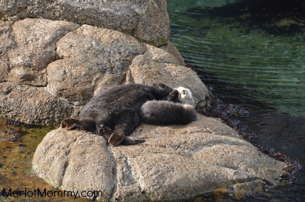 Monterey Bay Aquarium Finding Dory