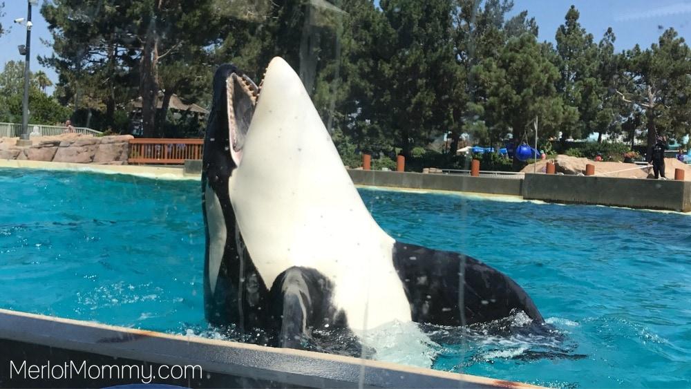 Create Memories at SeaWorld San Diego