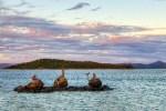Mermaids on Australia's Daydream Island