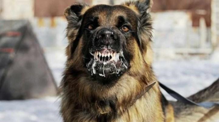 Masih Berkeliaran, Tiga Bocah di Pinrang di Serang Anjing Gila
