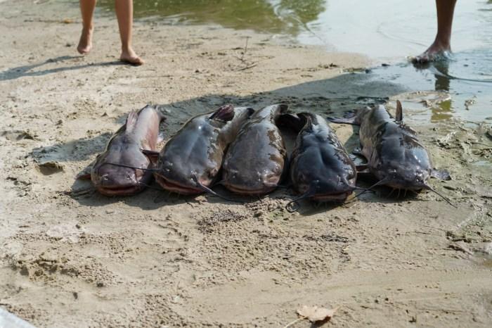 Fishing at Merritt - catfish